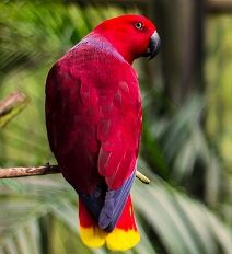 Beautiful-coach-parrot-98-212